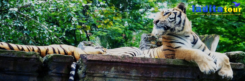 Safari Park Cisarua Bogor