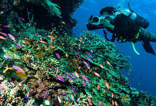 Diving and Snorkeling in Indonesia