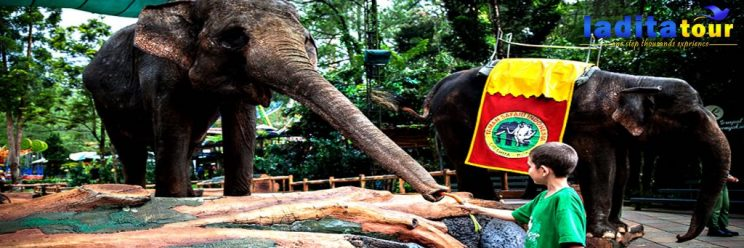 paket wisata taman safari indonesia